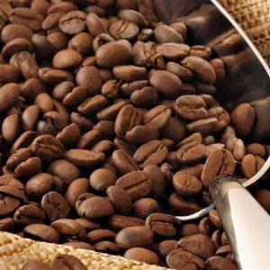 60% de las especies de Café en riesgo de extinción - Ecocosas