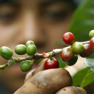 Café Madrid dejó de producir por falta de materia prima _ Revista Venezolana